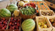 chicory market
