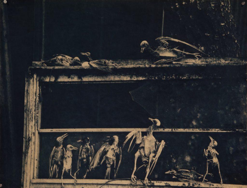 """""""Danse Macabre"""" by Jaime Aelavanthara"""